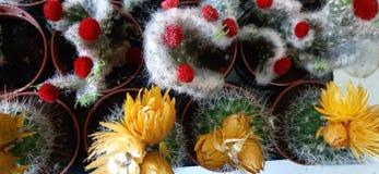 Peque?a flor del cactus fotografía de archivo