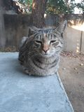 Peque?o gato fotos de archivo libres de regalías