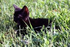 Peque?o gato lindo en la hierba imagen de archivo libre de regalías