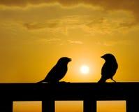 Pequeña charla del gorrión bajo puesta del sol Foto de archivo