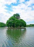 Pequeña isla con los árboles altos con una sombra en forma de corazón en la c Imagenes de archivo