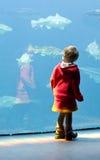 Pequeña muchacha en el acuario Foto de archivo libre de regalías