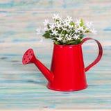 Pequeña planta en una regadera roja en la madera del color Imagen de archivo