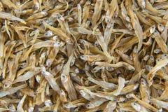 Pequeñas anchoas secadas de los pescados usadas en cocina asiática Foto de archivo