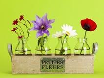 Pequeñas flores Fotos de archivo libres de regalías