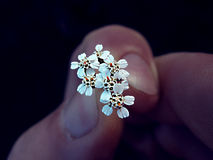 Pequeñas flores del amor grande Foto de archivo libre de regalías