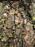 Pequeñas setas que crecen en tronco de árbol después de lluvia en invierno Imagenes de archivo