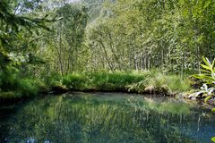 Pequena é a lagoa misteriosa bonita nas madeiras Fotografia de Stock Royalty Free
