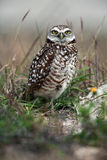 Pequeno Fotografia de Stock Royalty Free