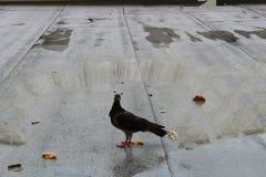Pequeno almoço do amanhecer Foto de Stock