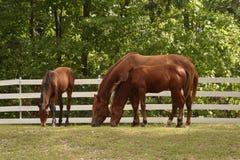 Pequeno almoço na exploração agrícola Fotografia de Stock Royalty Free