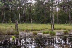 Pequeno amarre o lago Imagens de Stock