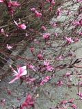 Pequenos flores brancas cor-de-rosa Fotos de Stock