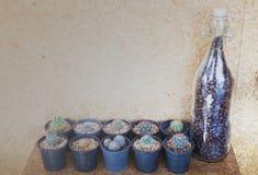 Pequeño cactus adornado en la pared del corcho Fotografía de archivo