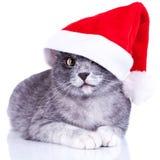 Pequeño gatito adorable con un casquillo de santa Foto de archivo libre de regalías