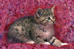 Pequeño gatito asustado rayado Imágenes de archivo libres de regalías
