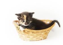 Pequeño gatito divertido deshilvanado en la cesta de mimbre Fotografía de archivo