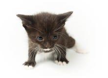 Pequeño gatito negro divertido Fotografía de archivo
