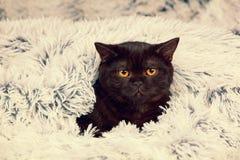 Pequeño gatito negro que mira a escondidas hacia fuera de debajo la manta Fotografía de archivo libre de regalías