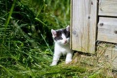 Pequeño gatito que se escabulle la esquina Fotos de archivo