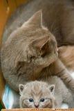 Pequeño gatito y su madre Imagenes de archivo