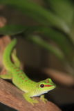 Pequeño lagarto verde apenas que se sienta en un registro Imagen de archivo libre de regalías