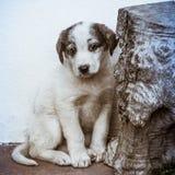 Pequeño perro de perrito tímido Imagen de archivo