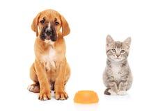 Pequeño perro y gato que miran la cámara Fotos de archivo