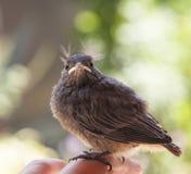Pequeño pájaro Imagen de archivo libre de regalías