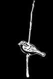 Pequeño pájaro en un gorrión de la rama Foto de archivo libre de regalías