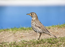 Pequeño pájaro en una colina Imágenes de archivo libres de regalías
