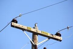 Pequeño pájaro encaramado encima de la encuesta de alto voltaje A Imágenes de archivo libres de regalías