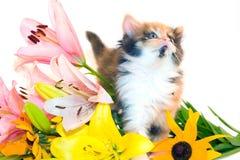 Pequeños gatito y flores Imagen de archivo
