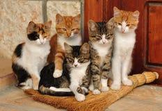 Pequeños gatos Fotos de archivo