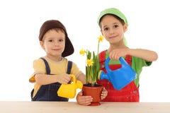 Pequeños niños que cuidan para el narciso potted Fotografía de archivo