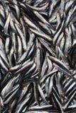Pequeños pescados Foto de archivo libre de regalías