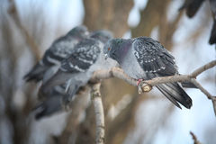 Pequeños pájaros en una rama de árbol Fotos de archivo libres de regalías