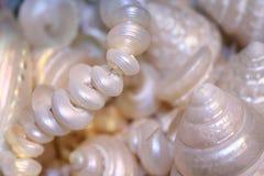 perła macierzystego zdjęcia stock