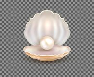 Perły otwartej skorupy realistyczna ilustracja Naturalny piękny przerzedże perełkową denną biżuterię odizolowywającą ilustracji