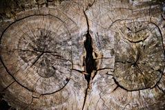 Per albero Fotografia Stock