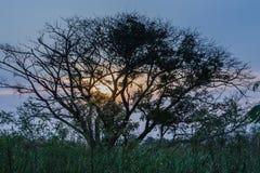Per concludere, dopo l'illuminazione dell'albero. Fotografia Stock Libera da Diritti