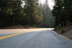per conservare natura Foresta nazionale della sequoia immagini stock