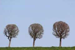 Per il tempo presente senza foglie Fotografia Stock