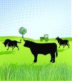 Per per allevare gli animali Immagine Stock