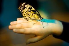 Per per catturare la farfalla immagini stock