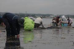 per prendere le coperture a Hamamatsu Giappone, la gente a catach e raccogliere le coperture o pescare fotografie stock libere da diritti
