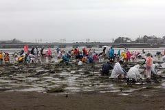 per prendere le coperture a Hamamatsu Giappone, la gente per prendere e raccogliere le coperture o per pescare fotografia stock