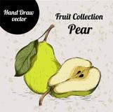 Pera coloreada dibujada mano del bosquejo Ejemplo de la comida del eco del vintage Imágenes de archivo libres de regalías