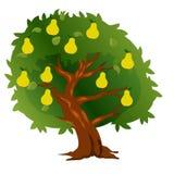 Pera dell'albero con frutta e le foglie verdi Fotografie Stock Libere da Diritti