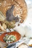 Pera ed insalata della rucola con i pinoli vicino al bello coniglio bianco Immagini Stock